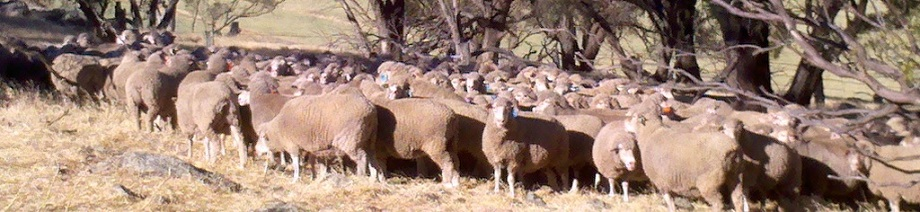 dohne ewes resting
